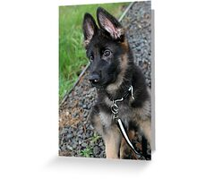Alert and ready for fun Greeting Card