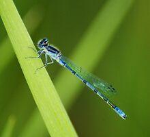 Blue Dragonfly iPad by KBritt
