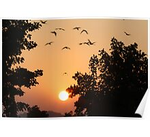 SUNSET IN THE BANKS OF NARMADA RIVER Poster