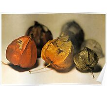 Physalis Part I. Poster