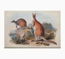 A monograph of the Macropodidæ or family of kangaroos John Gould 1842 022 Osphranter Antilopinus One Piece - Short Sleeve