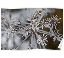 Macro shot of frosty wildflower blooms Poster
