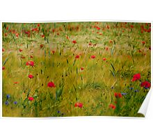 Field of wheat, red poppies and blue cornflowers Poster