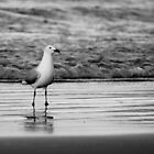 The Gulls - #1 by ExposureTherapy