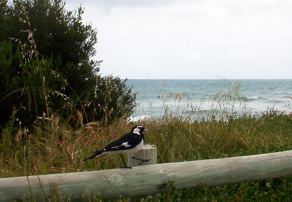 Goose Step Beach Bird by Robert Phillips