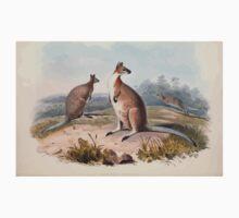 A monograph of the Macropodidæ or family of kangaroos John Gould 1842 017 Halmaturus Ruficollis Kids Tee