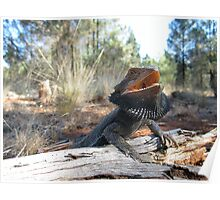 Eastern Bearded Dragon Poster