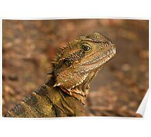 Currumbin Wildlife Sanctuary - Water Dragon  Poster