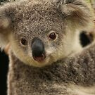 Australia Zoo - Young Koala   by Sea-Change