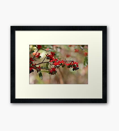 Berries and flowers Framed Print