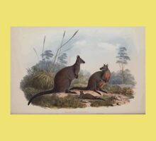 A monograph of the Macropodidæ or family of kangaroos John Gould 1842 018 Halmaturus Ualabatus Kids Tee