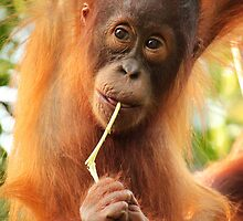Tanjung Puting - Central Kalimantan - Indonesia by Erin McMahon
