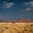 Dromodaries - Ranges Country, WA by Liam Byrne