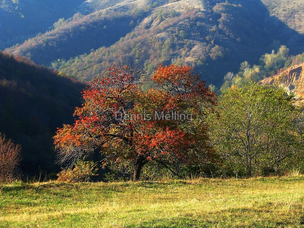 Autumn Trees in Barda, Romania by Dennis Melling
