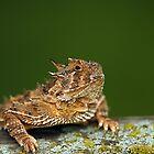 Texas Horned Lizard by Samantha Dean
