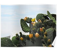 Greek Island Orange Cactus Poster