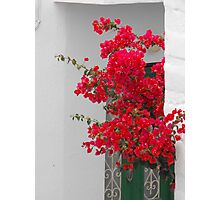 Greek Island green window and flower Photographic Print