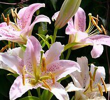 Oriental lilies by Greta van der Rol