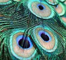 Peacock Feathers by Havocgirl