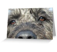 Nosey Labradoodle.... Greeting Card