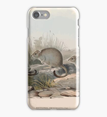 A monograph of the Macropodidæ or family of kangaroos John Gould 1842 014 Bettongia Penicillata iPhone Case/Skin