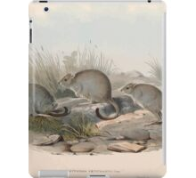 A monograph of the Macropodidæ or family of kangaroos John Gould 1842 014 Bettongia Penicillata iPad Case/Skin