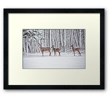 Winter Visit Framed Print