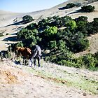 Horses in a Field by Jonathan Melicharek