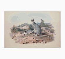 A monograph of the Macropodidæ or family of kangaroos John Gould 1842 019 Halmaturus Parryi Kids Tee