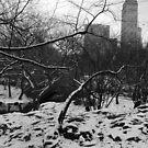 Central Park Snow by WhiteDiamond
