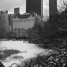 Central Park Snow 2 by WhiteDiamond