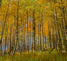 Aspen Grove - Hope Valley by David Galson