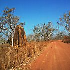 A track in the Northern Territory by myraj