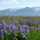 Olympic Mountains by WhiteDiamond