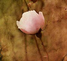Last Rose of Autumn iPad Case by Carol Bleasdale