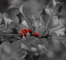 Christmas Holly and Berries by max  randall