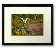White Tail Early Autumn Framed Print