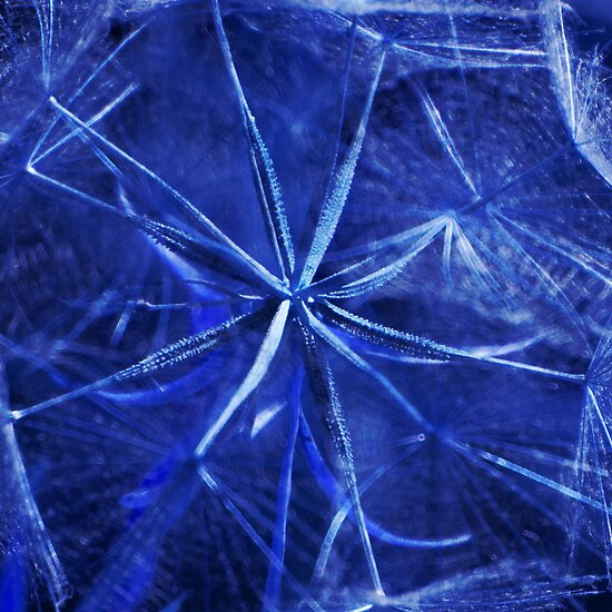 Blue Dandelion by James Eddy