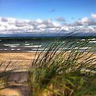 dunegrass on beach by Eve Landsman