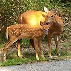 mother and baby deer by Eve Landsman
