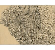 Wisent II (European Bison) Photographic Print