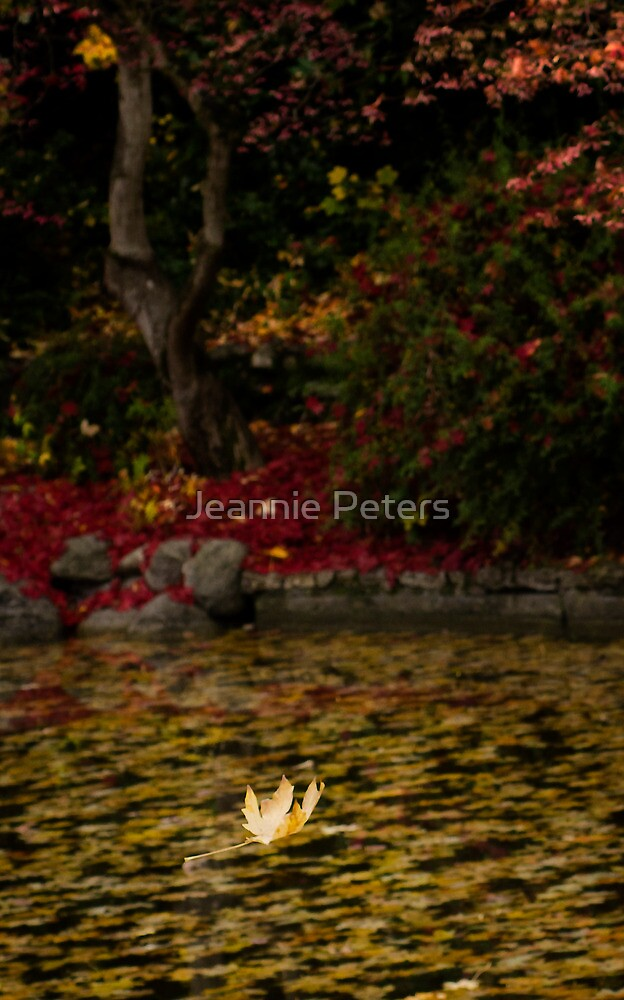 autumn leaf by Jeannie Peters