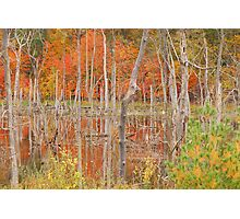 Swamp Colors Photographic Print