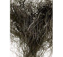 Heart of Vines (Black & White)  Photographic Print