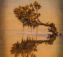 Little Old Mangrove by Bette Devine
