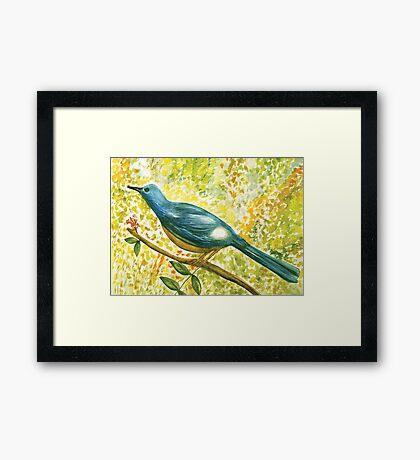 Earthy blue white Squire bird Framed Print