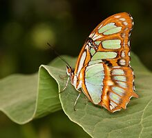 Malachite on the edge by ruth  jolly
