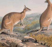 A monograph of the Macropodidæ or family of kangaroos John Gould 1842 020 Halmaturus Agilis Sticker