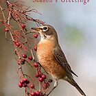 Robin and Red Berries by Tracy Riddell