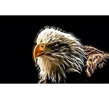 Wild nature - eagle #4 Photographic Print